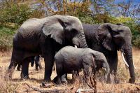 Photo   Elephants   Ray Rui