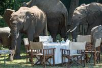 Photo   Elephants   David Clode