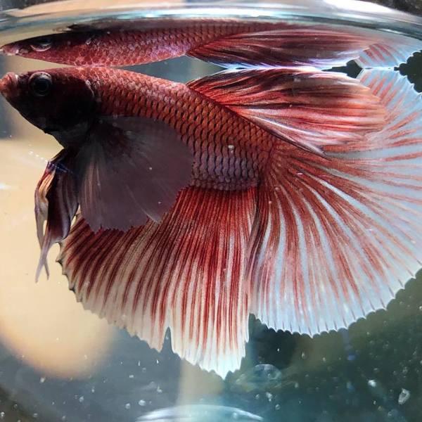Fish Connection | Durango Colorado Pet Store | Tropical Fish