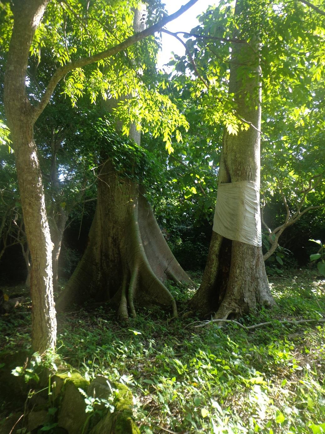 Árvore Egbé Osogbo Nigéria