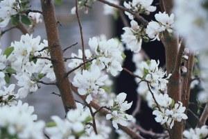 Trimming / Pruning