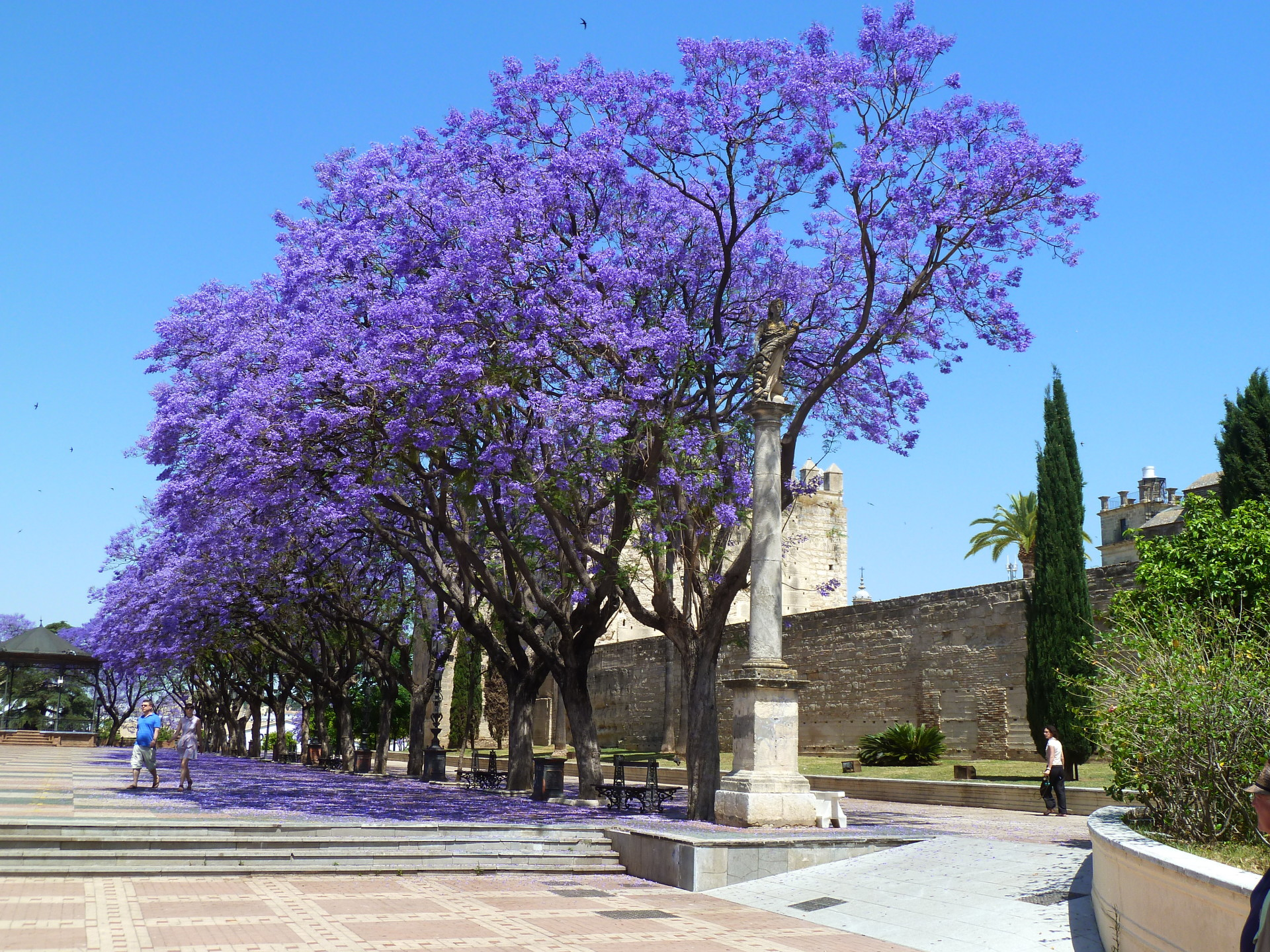 Jacaranda trees next to the Alcazar, Jerez