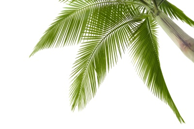 Coqueiro
