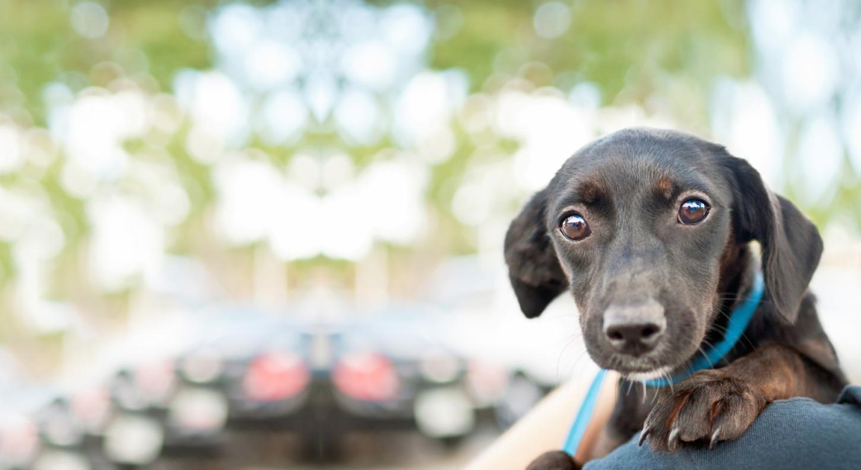 Northern Kentuckys Best Pet Sitting Dog Walking Home