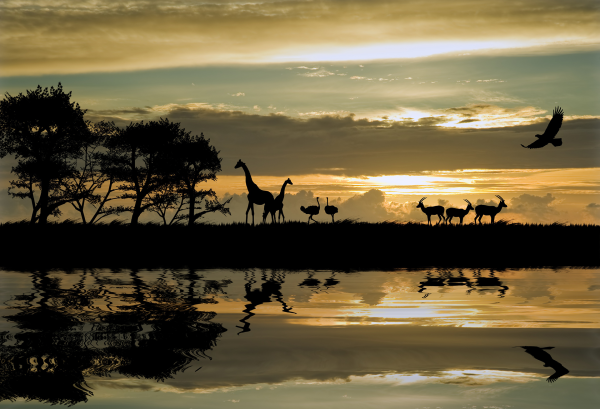 Solo Travel in Africa