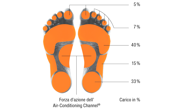 Weight-bearing zones of the foot