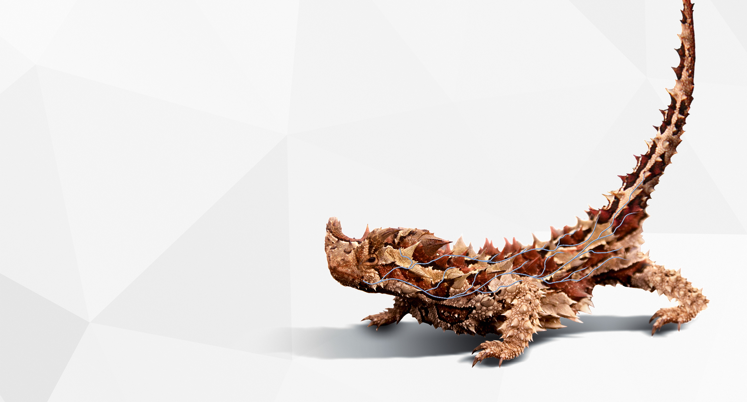 Thorny Devil Technology