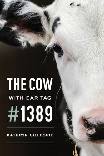 Cow with Ear Tag #1389
