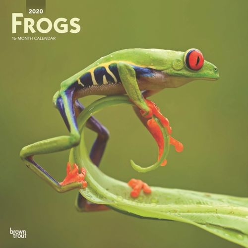 Frogs 2020 Square Wall Calendar