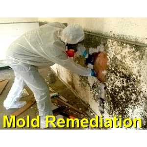 mold remediation Fort Bliss