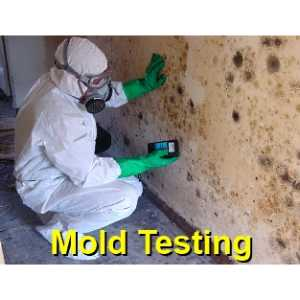 mold testing Friendswood