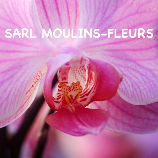 Moulins Fleurs SARL Ouvert le dimanche