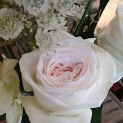 Allons Voir Si La Rose Ouvert le dimanche