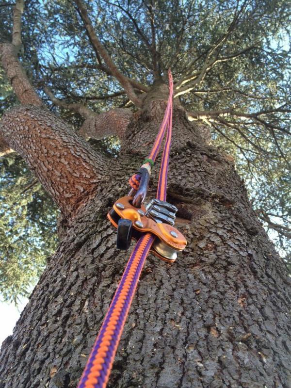 Acro Elagage arboriculture et production de fruits