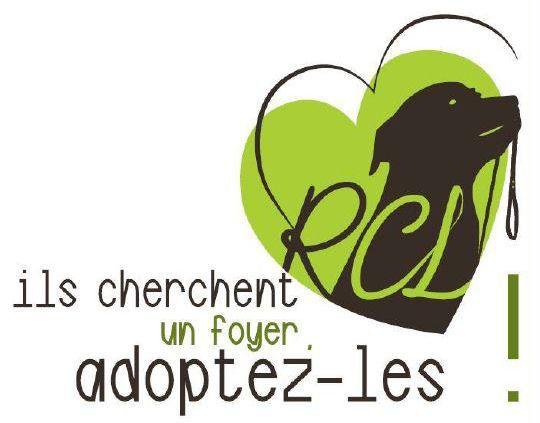 Refuge Canin Lotois refuge et fourrière pour animaux