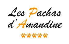 Les Pachas d'Amandine refuge et fourrière pour animaux