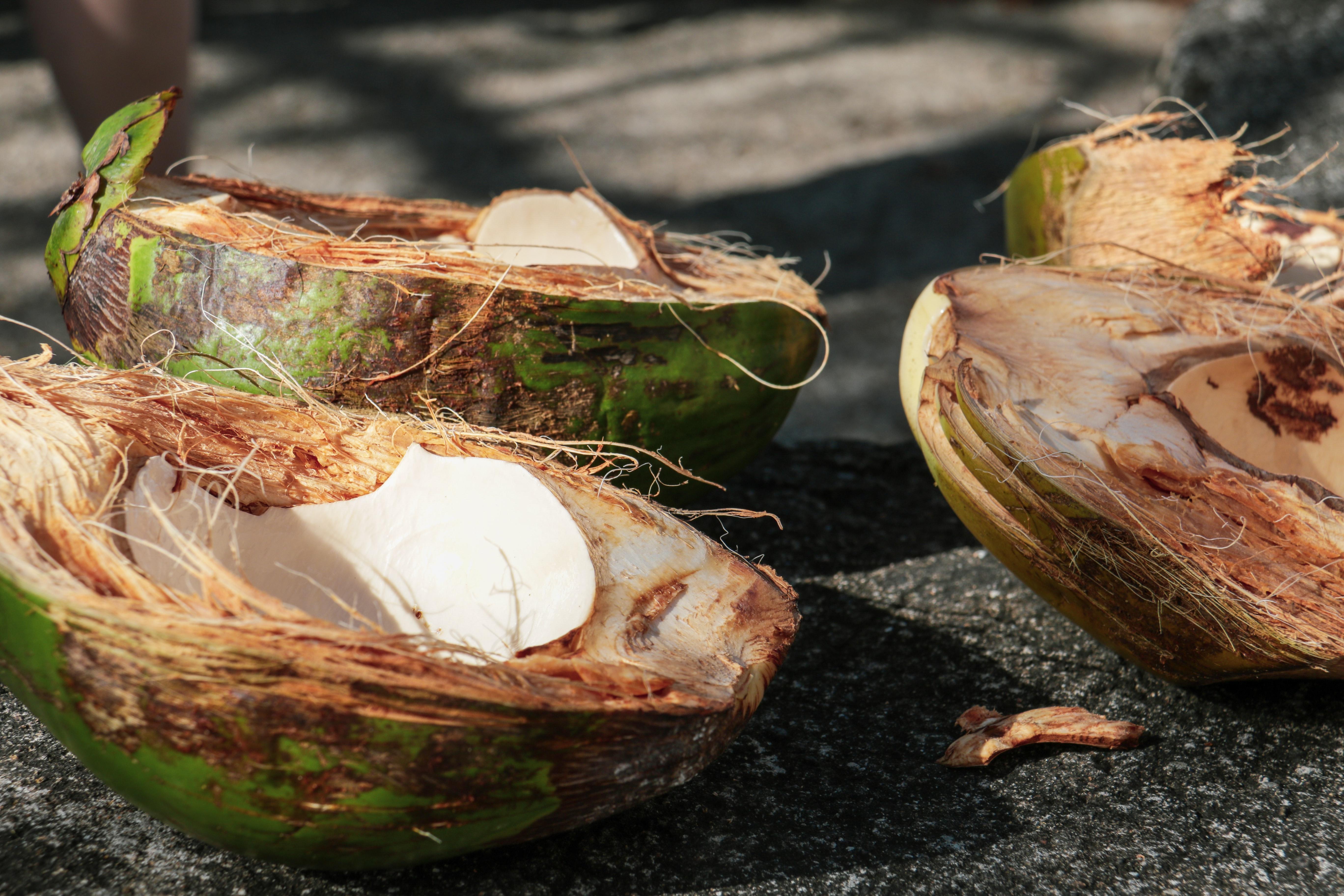 Aceite de coco: el verdadero aceite multiusos