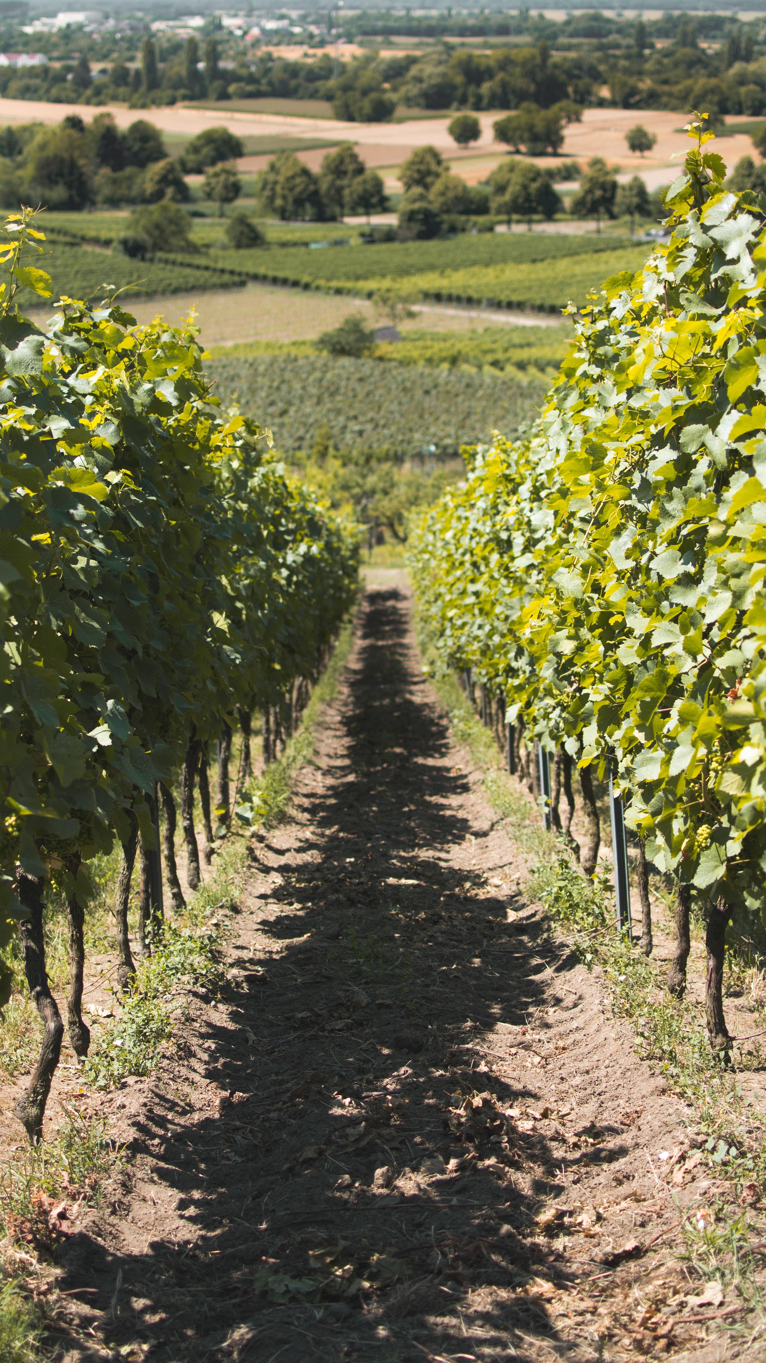 Principales regiones vinícolas en México
