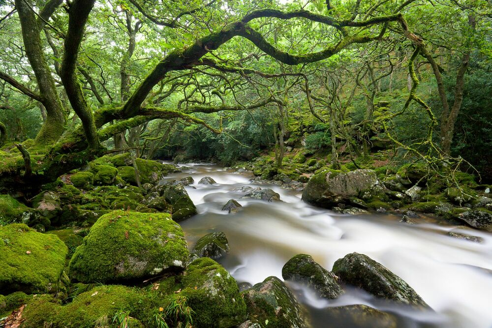 Photograph Forbidden Forest - ADAM BURTON - Picture painting