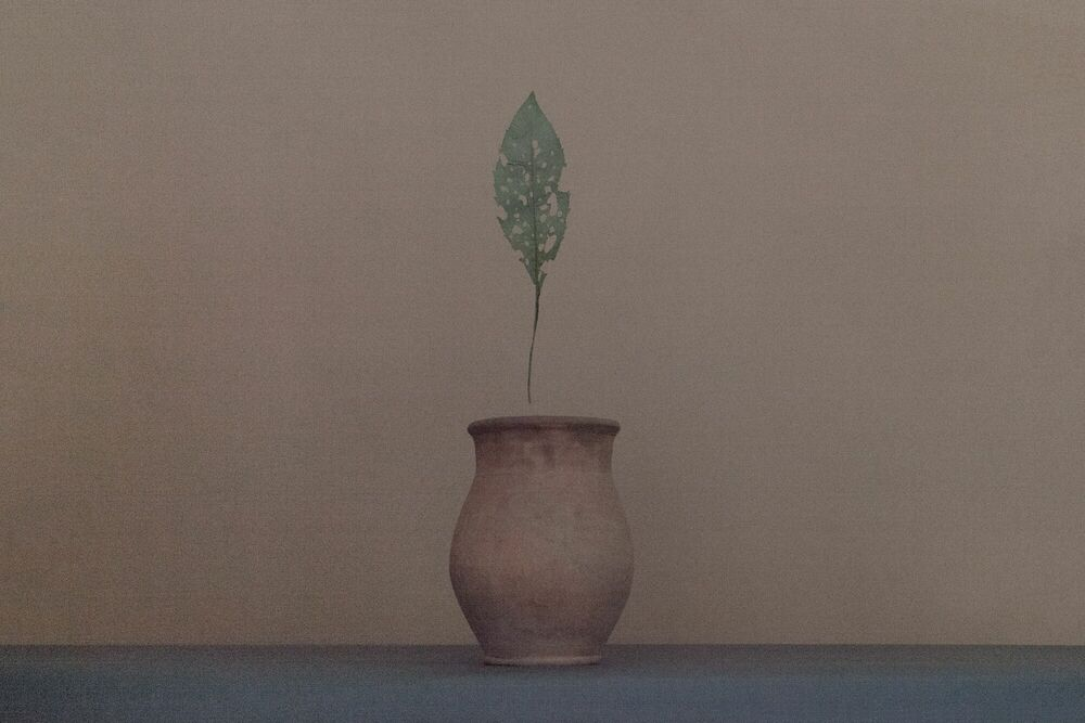 Photograph WITHOUT MEMORY - ALISA DONOVA - Picture painting
