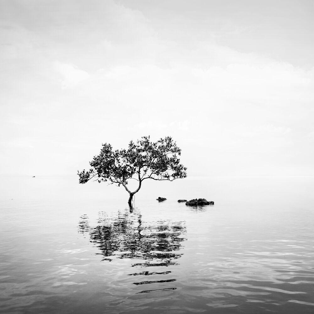 Fotografie HAPPY TREE - ALMA  - Bildermalerei