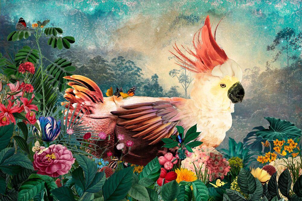 Fotografia PSITTACEROS - ANDRE SANCHEZ - Pittura di immagini