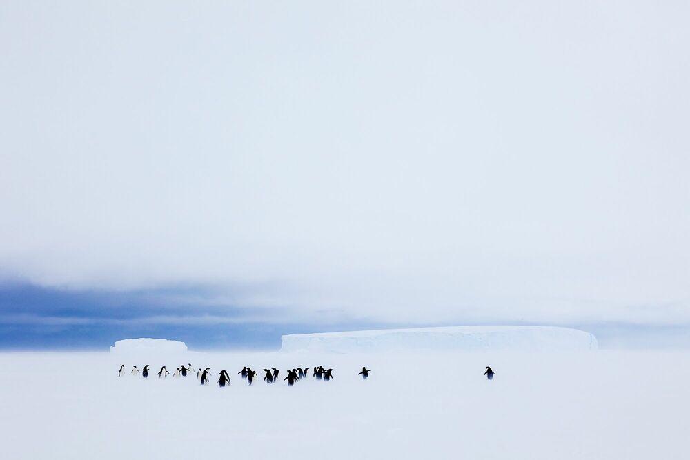Fotografie BLIZZARD - ANDREW PEACOCK - Bildermalerei