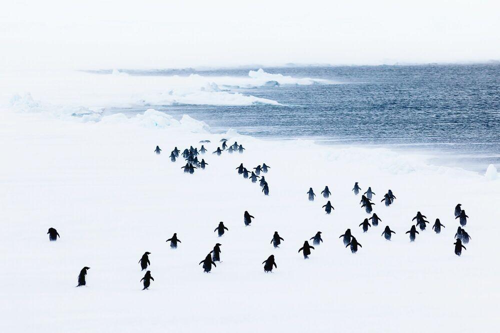 Fotografie WHITE STORM - ANDREW PEACOCK - Bildermalerei