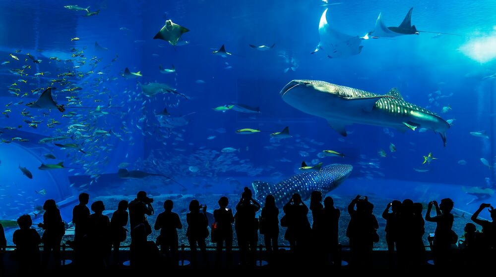 Photographie THE SHARK - ANDY YEUNG - Tableau photo