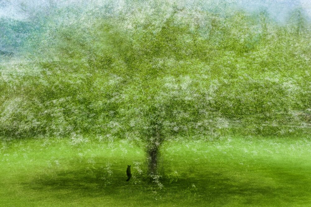 Photographie CAT IN THE APPLE BLOSSOMS TIME - ARNE OSTLUND - Tableau photo