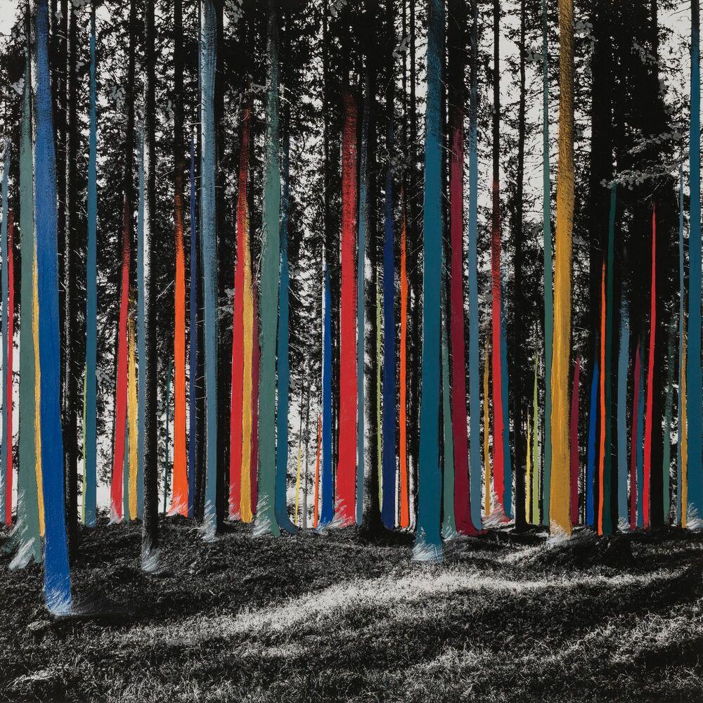 Fotografia La forêt en aplats -  Ava x K - Pittura di immagini