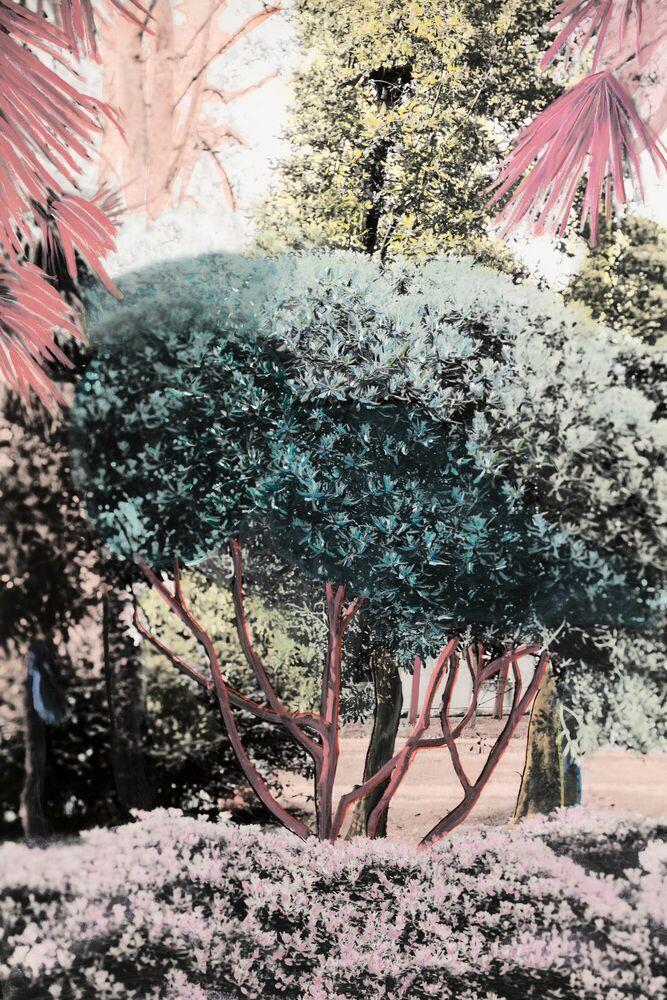 Photographie Le jardin d'antan -  Ava x K - Tableau photo