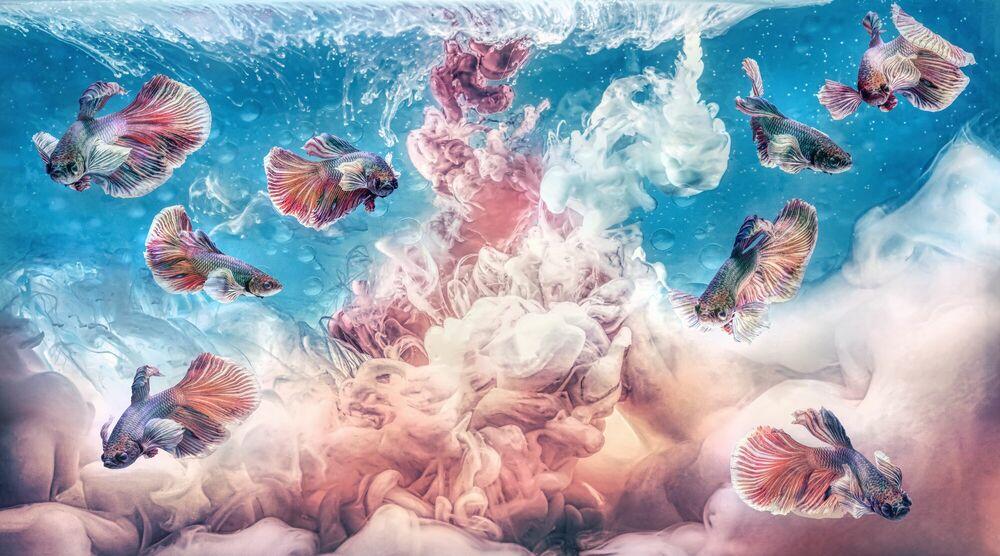 Fotografie Aquamania 1  - BERNHARD HARTMANN - Bildermalerei