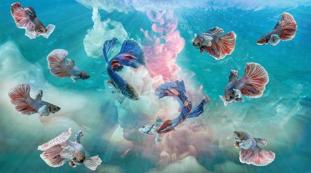 Fotografia Aquamania 2 - BERNHARD HARTMANN - Pittura di immagini