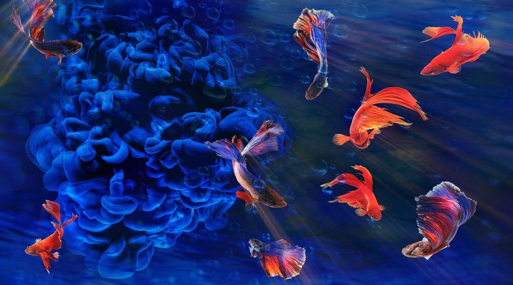 Fotografia Aquamania 3 - BERNHARD HARTMANN - Pittura di immagini