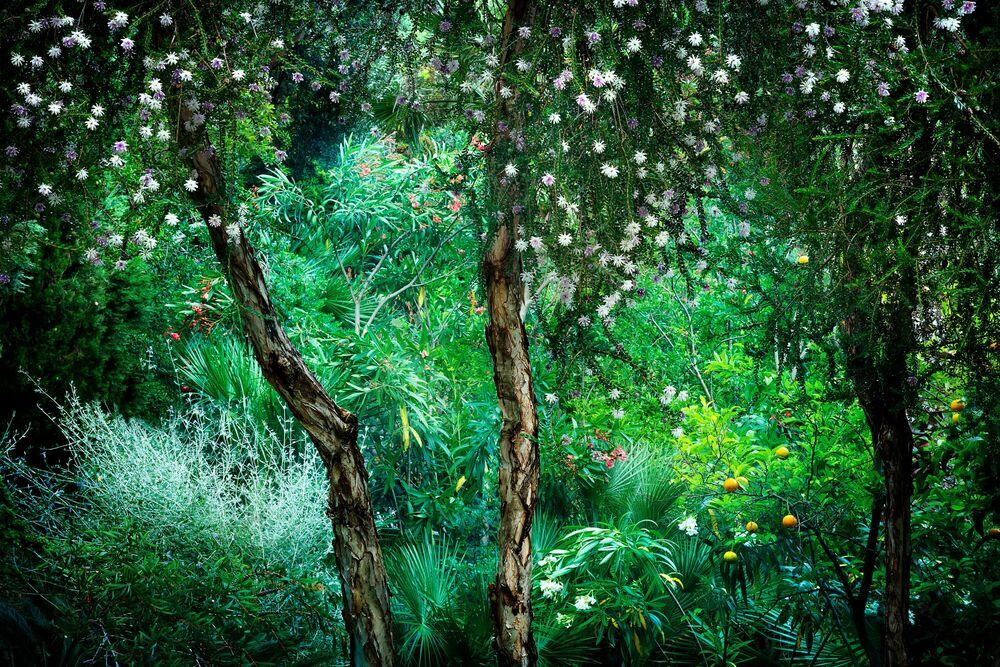 Photograph Le Jardin Eden 1 - BERNHARD HARTMANN - Picture painting