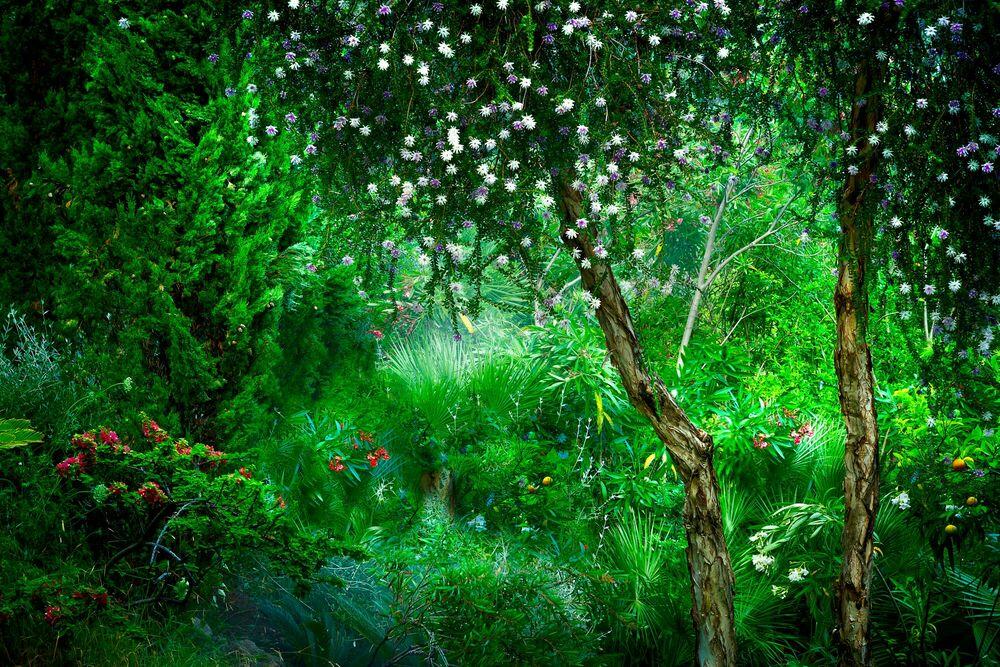 Photograph Le Jardin Eden 2 - BERNHARD HARTMANN - Picture painting