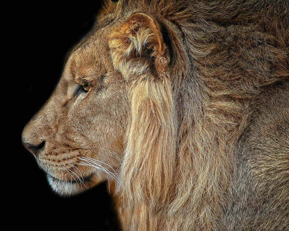 Photograph Royalty - Carol Lyon - Picture painting
