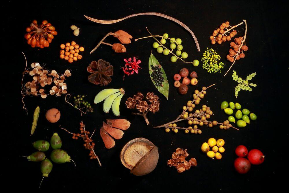 Kunstfoto BHUTANS BIODIVERSITY - CHRISTIAN ZIEGLER - Foto schilderij