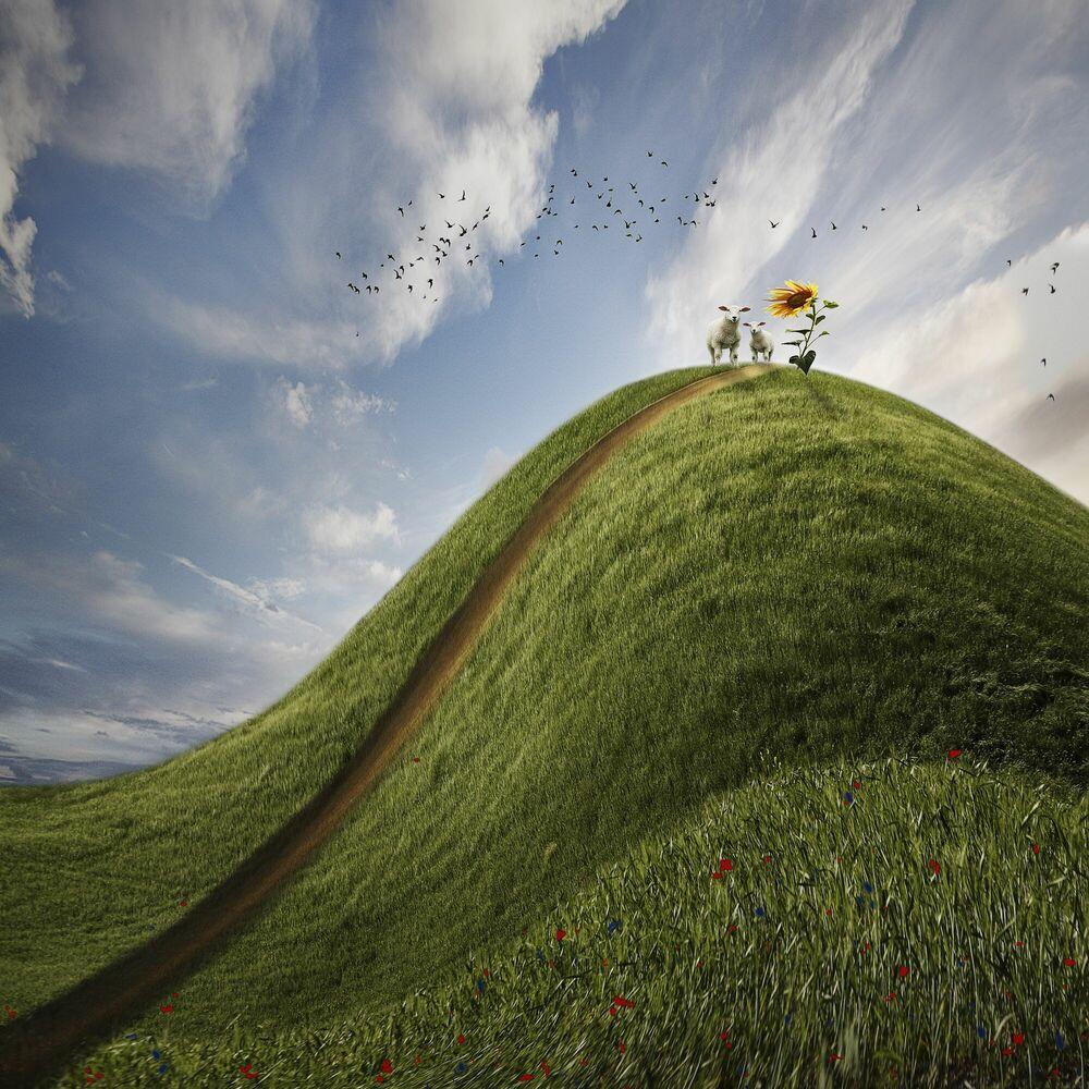 Fotografie Wolkenschafe - CHRISTINE ELLGER - Bildermalerei