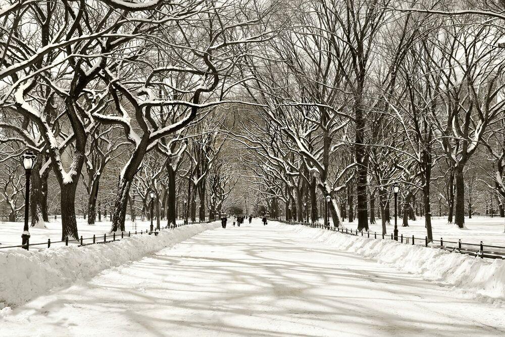 Photographie Bliss-Poet's Walk Central Park - CHRISTOPHER BLISS - Tableau photo