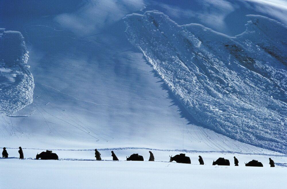 Photographie Yak Avalanche - DEBRA KELLNER - Tableau photo