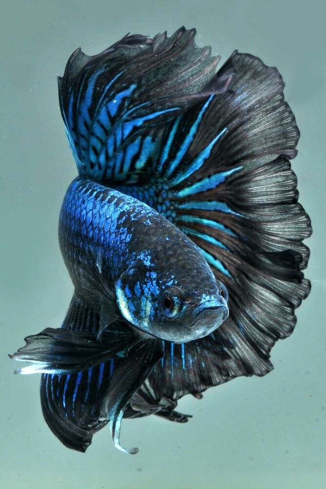 Fotografie DRAGON FISHS - DHIKY ADITYA - Bildermalerei