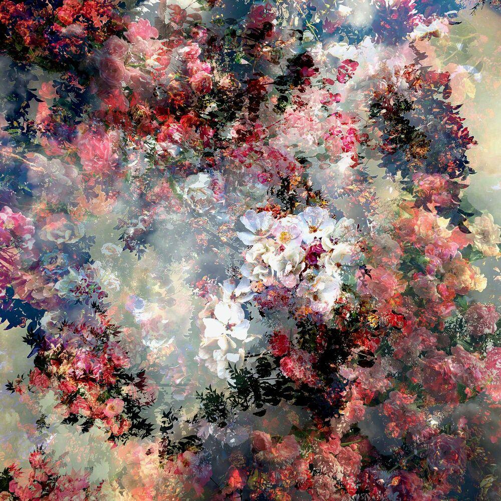 Fotografia Fragment de paysage 6185 - Didier Claes - Pittura di immagini