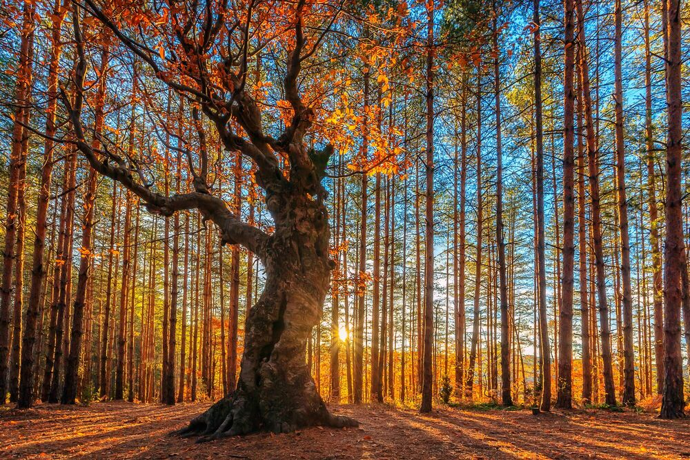Photographie The King of the Forest - EVGENI DINEV - Tableau photo