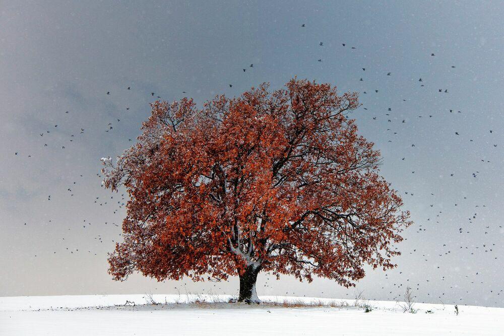 Photographie Tree of Life - EVGENI DINEV - Tableau photo