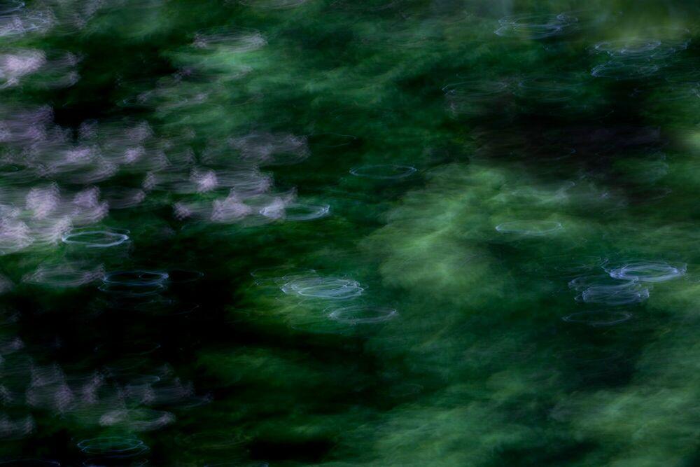 Fotografia Oak - Fan Li - Pittura di immagini