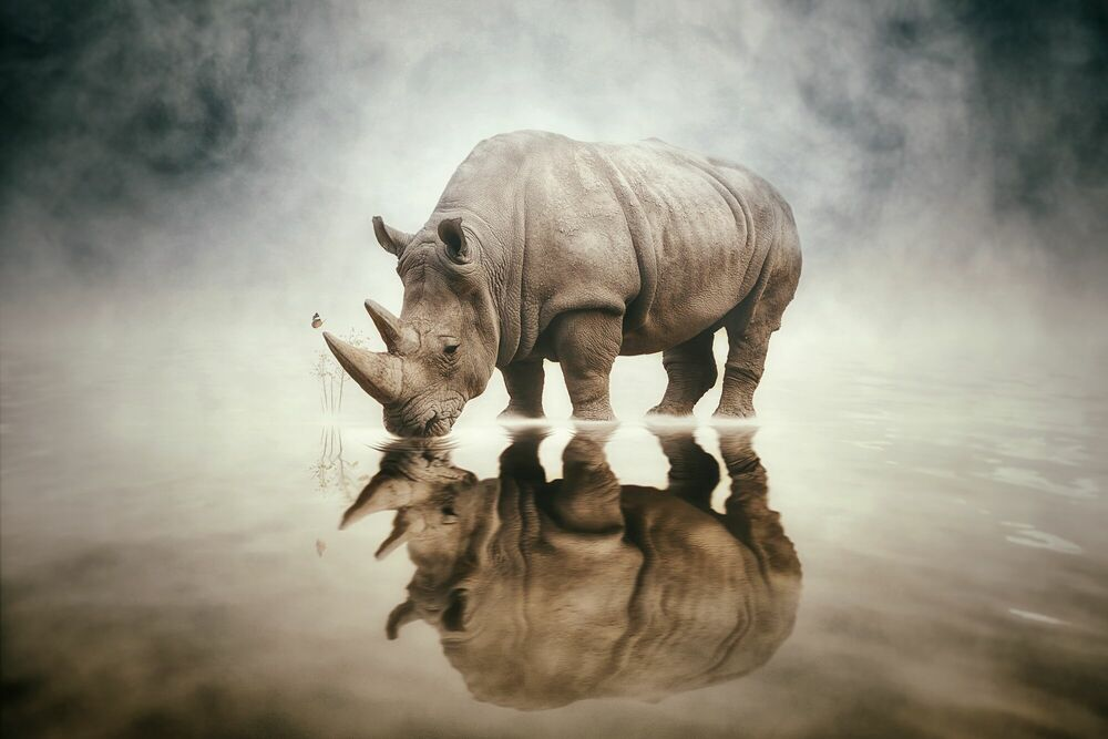 Photograph RHINO - FELIX HERNANDEZ DREAMOGRAPHY - Picture painting