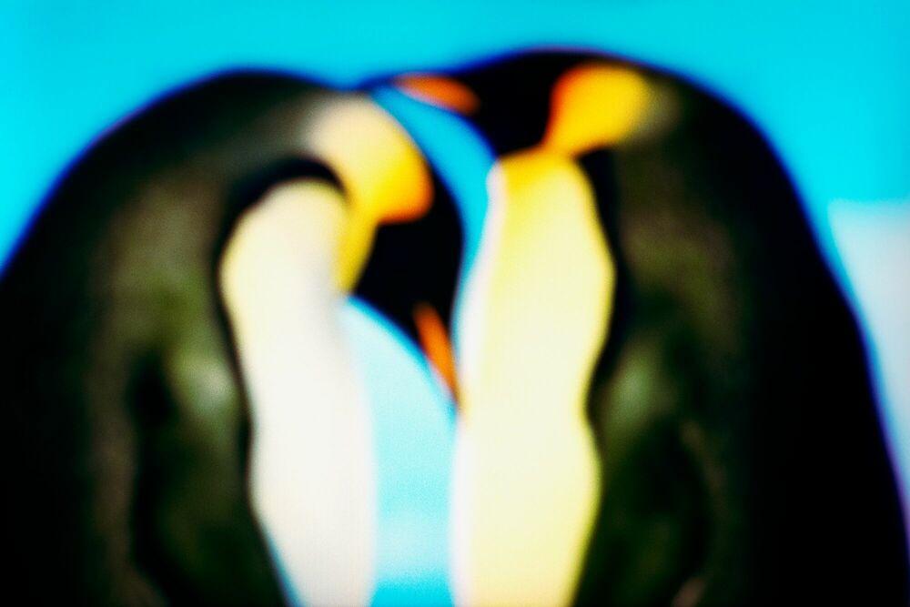 Fotografie MARCH OF THE PINGUINS - FRANÇOIS FONTAINE - Bildermalerei