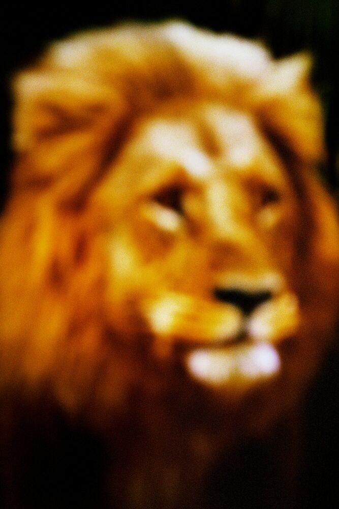 Fotografia THE LION - FRANÇOIS FONTAINE - Pittura di immagini
